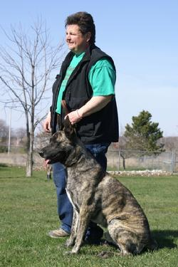 "Dutch Shepherd CH ""Becker"" at Cher Car Kennels"