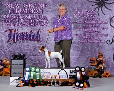 No. 1 Parson Russell Terrier and New GRAND CHAMPION