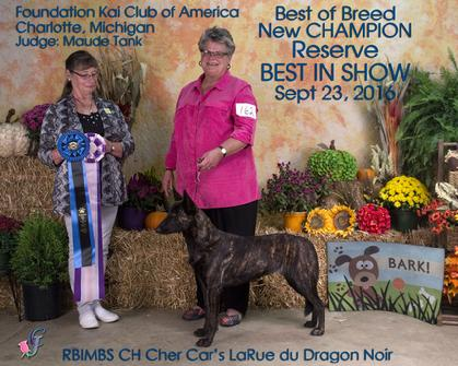 Reserve BEST IN SHOW and NEW CHAMPION
