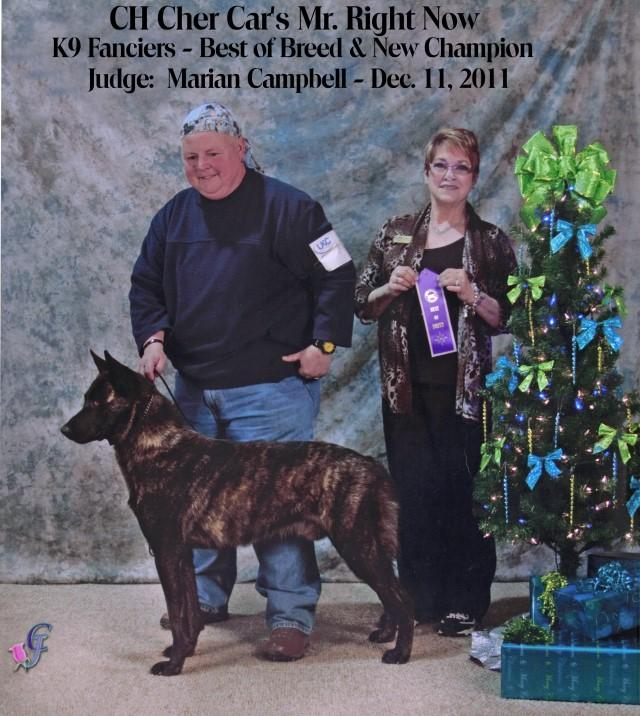 "Dutch Shepherd CH ""Lother"" at Cher Car Kennels"
