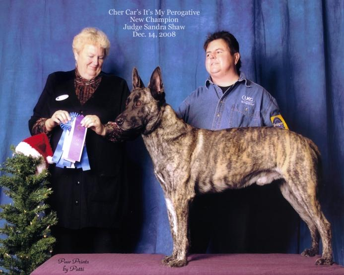 "Dutch Shepherd ""Touche"" at Cher Car Kennels"