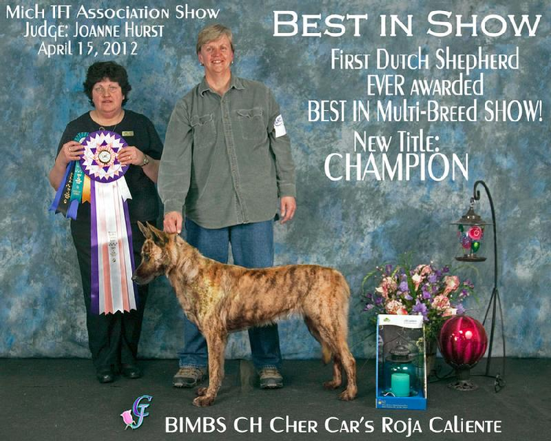 Best in Multi Breed Show Dutch Shepherd CH Cher Car's Roja Caliente (Cayenne) at Cher Car Kennels