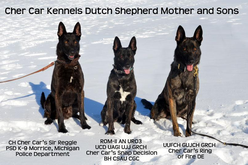 Dutch Shepherds from Cher Car Kennels