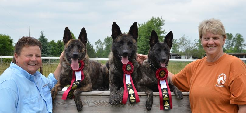 Dutch Shepherd TOTAL DOGS at Cher Car Kennels