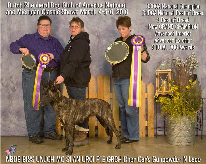 "Dutch Shepherd GRCH ""Lace"" at Cher Car Kennels in St. Johns, Michigan"